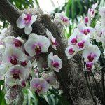 Белые цветы орхидеи в природе