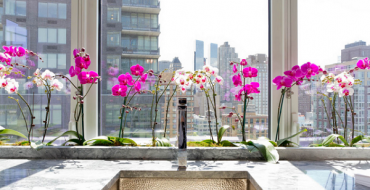Орхидеи на подоконнике дома