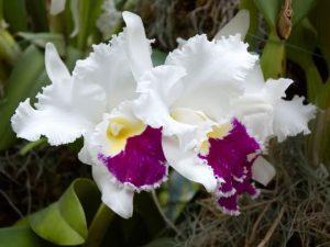 Когда и как можно пересаживать орхидею: правила и советы