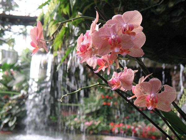 Дикая орхидея в природе