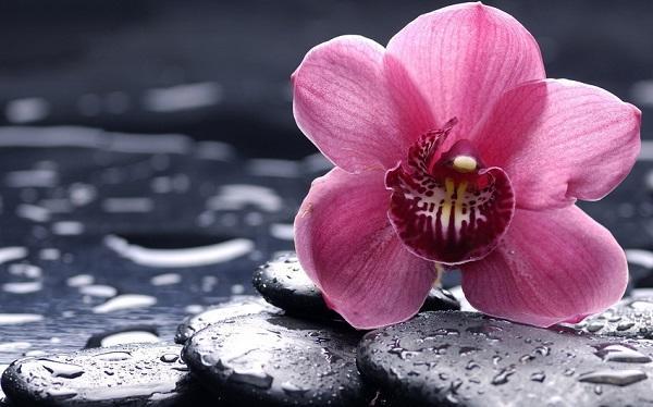 Цветок орхидеи на камнях