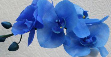 Голубые цветы орхидеи дома