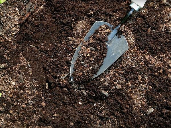 Почва для посадки кротона