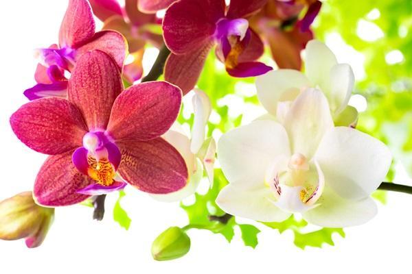 Разноцветные цветы орхидеи