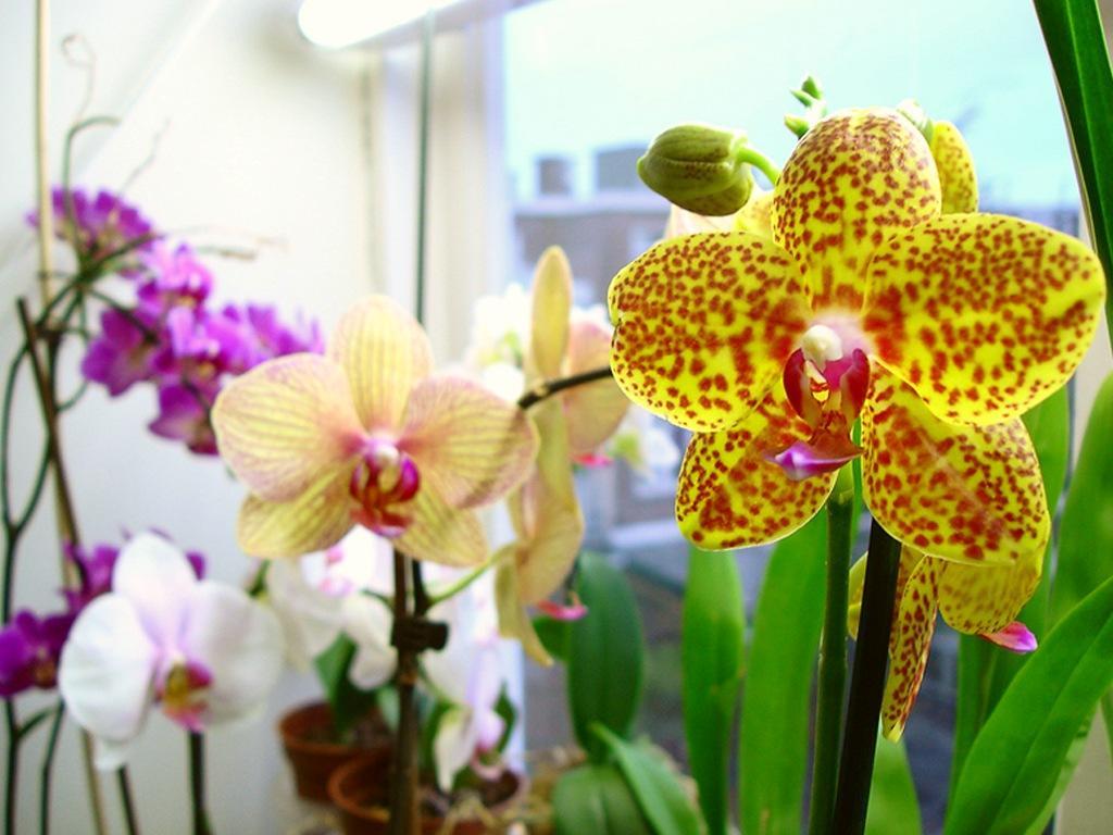 Подготовка коры для посадки орхидей