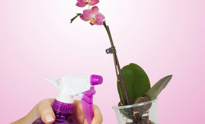 Опрыскиевание листьев фаленопсиса