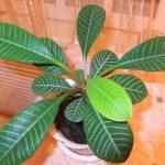 Опасное домашнее растение
