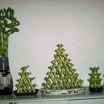 Комнатное растение бамбук в композиции