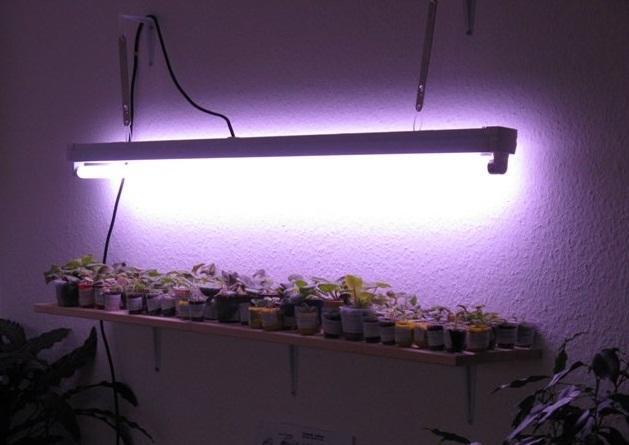 Фитолампа для домашних растений
