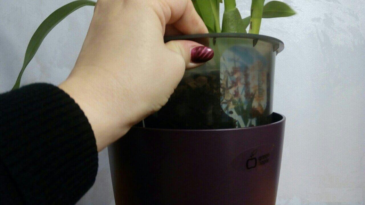 Самоорошающиеся горшки для комнатных растений
