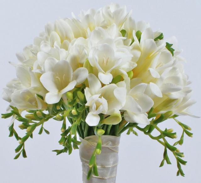 Комнатное домашнее растение Фрезия