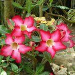 Красивое, но ядовитое растение в доме