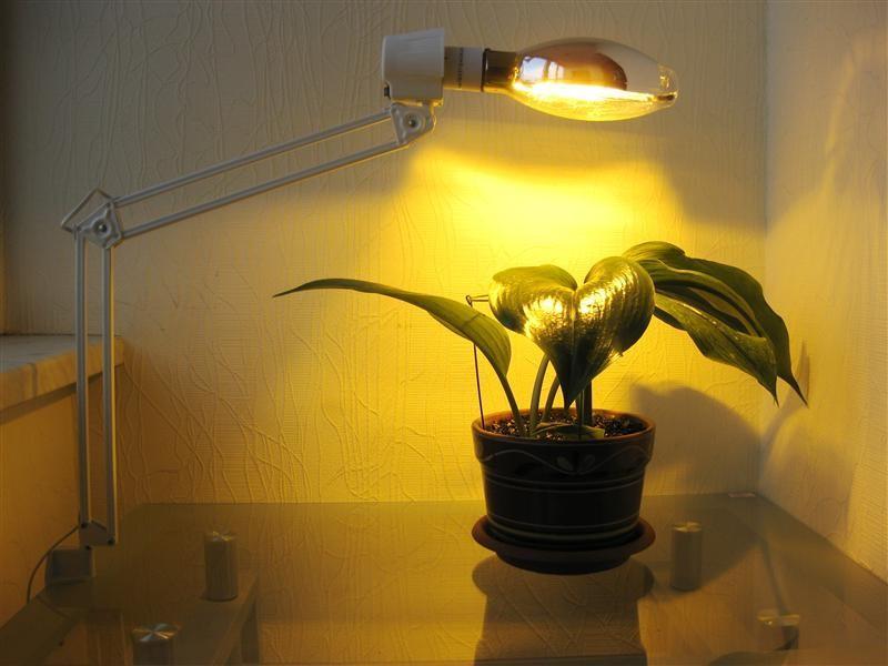 Лампа накаливания для домашних растений