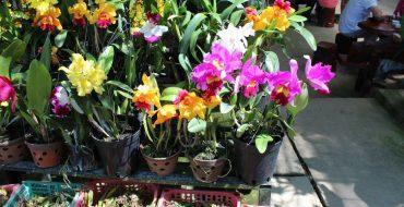 Орхидеи в горшках, привезенные из Вьетнама
