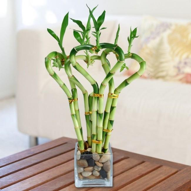 Неприхотливое растение бамбук