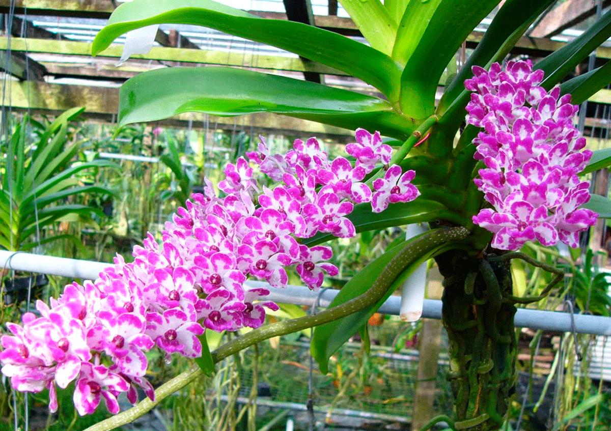 Необычные цветки, растущие во Вьетнаме
