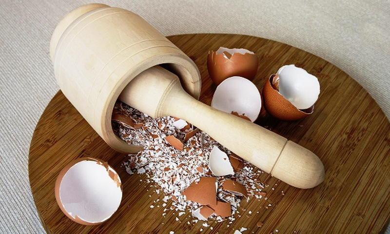 Измельчение остатков яйца для приготовления удобрения