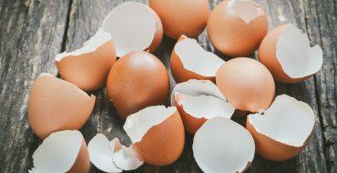 Яичная скорлупа как удобрение для растений