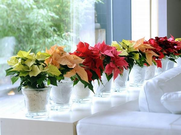 Разнообразные цветы комнатного цветка