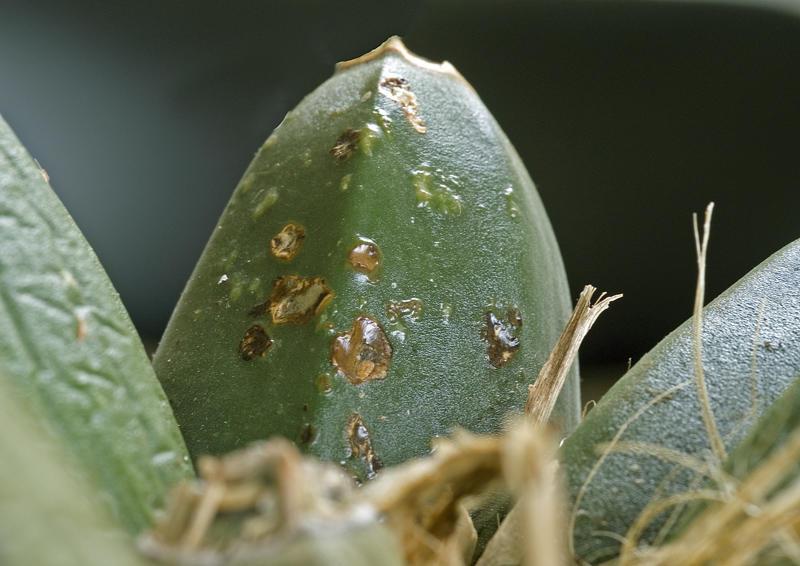 Грибковые поражения комнатных растений