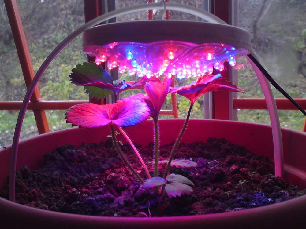 Использование светодиодов для комнатных цветов