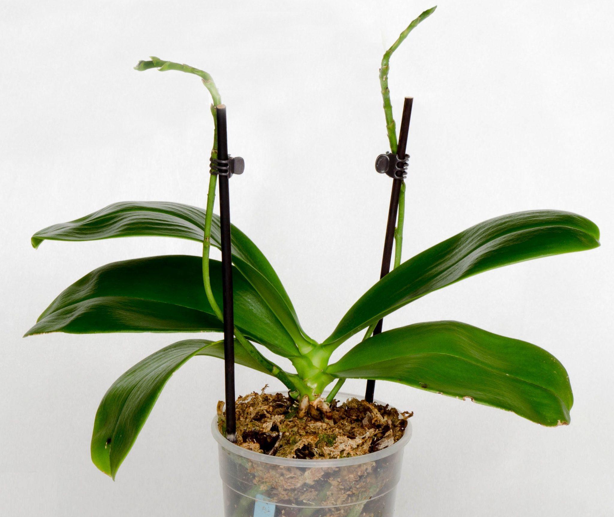 Орхидея уход в домашних условиях за листьями