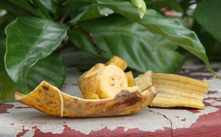 Удобрение для комнатных цветов из бананов