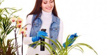 Зимой все домашние растения находятся в состоянии покоя