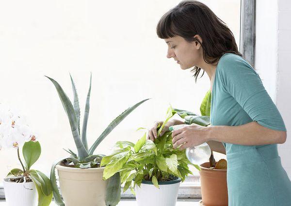 14–17 декабря стоит заняться поливом комнатных растений