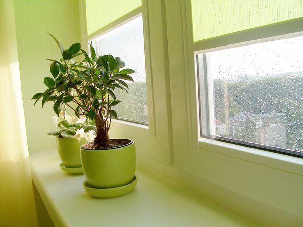 В декабре растения защищают от вредителей