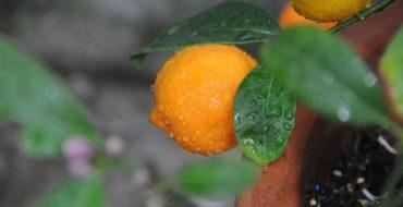 Мандарин - один из самых полезных фруктов