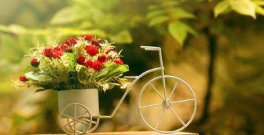 Лунный календарь комнатных растений поможет цветоводам