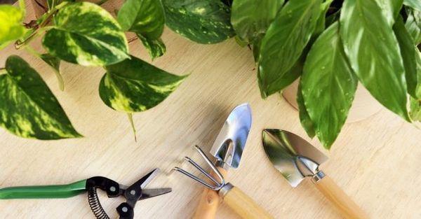 В новолуние садоводы рекомендуют не подходить к горшкам