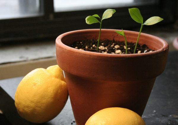 Семена всходят за 1 неделю