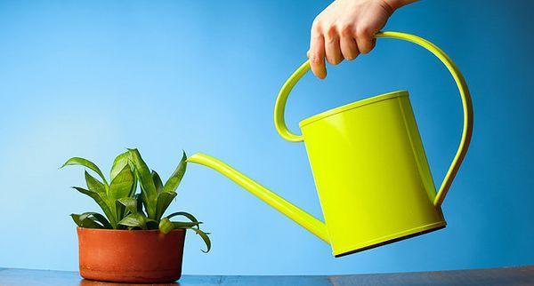 Правильный полив - залог хорошего роста растений