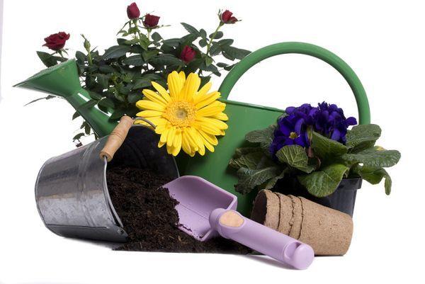 Не стоит пересаживать цветы в новолуние