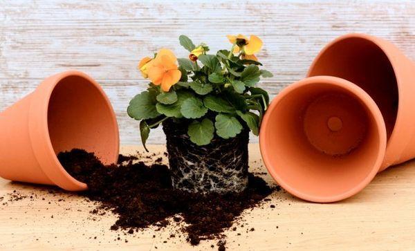 4 ноября полностью запрещено влиять на цветы