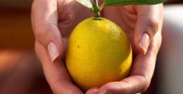 Домашний лимон подвержен различным заболеваниям