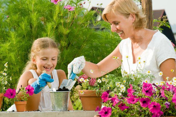 В июне допускается проведение перевалки растений