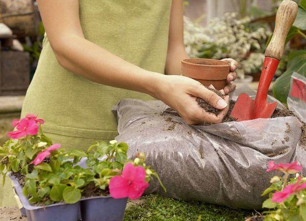 В осенний период не рекомендуется трогать растения