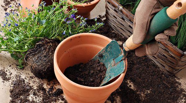 Лунный календарь поможет садоводу правильно сажать цветы