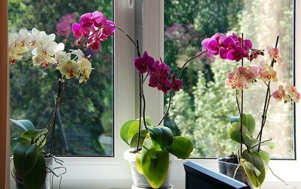 Растению нужна температура около +25 градусов