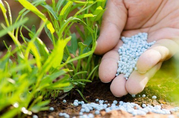 Фосфорные удобрения подходят для цитрусовых