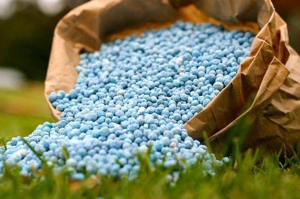 Минеральные удобрения улучшают рост растения
