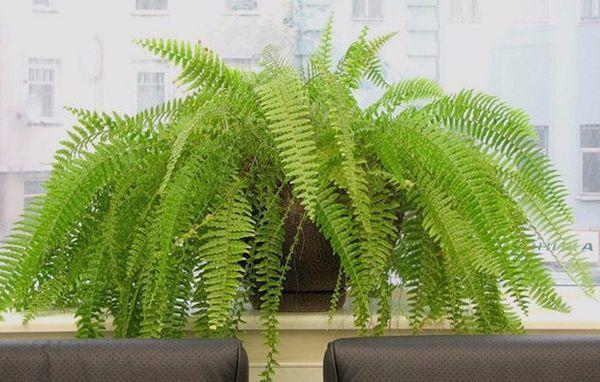 Папоротники (не только комнатные) – растения, любящие тень
