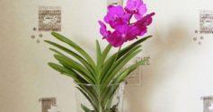Особенности ухода за орхидеей Ванда в стеклянной вазе