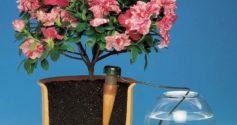Как не загубить цветы во время отпуска: организация полива