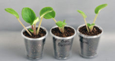 Рекомендации новичкам как посадить фиалку с листочка