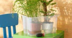 Простые советы: как поливать фикус водой и питательными растворами