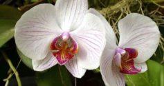 Как выбрать орхидею – секреты правильной покупки